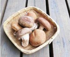 発酵食品で菌を摂取